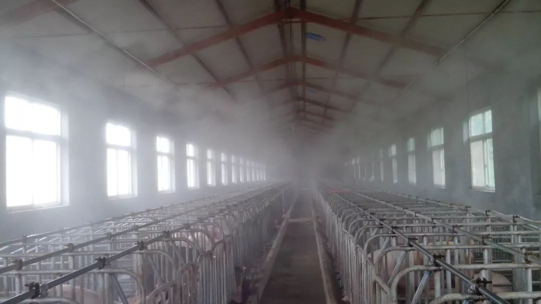 养猪场消毒设备_冬季猪场消毒必不可少,但消毒剂用量并非越大越好...