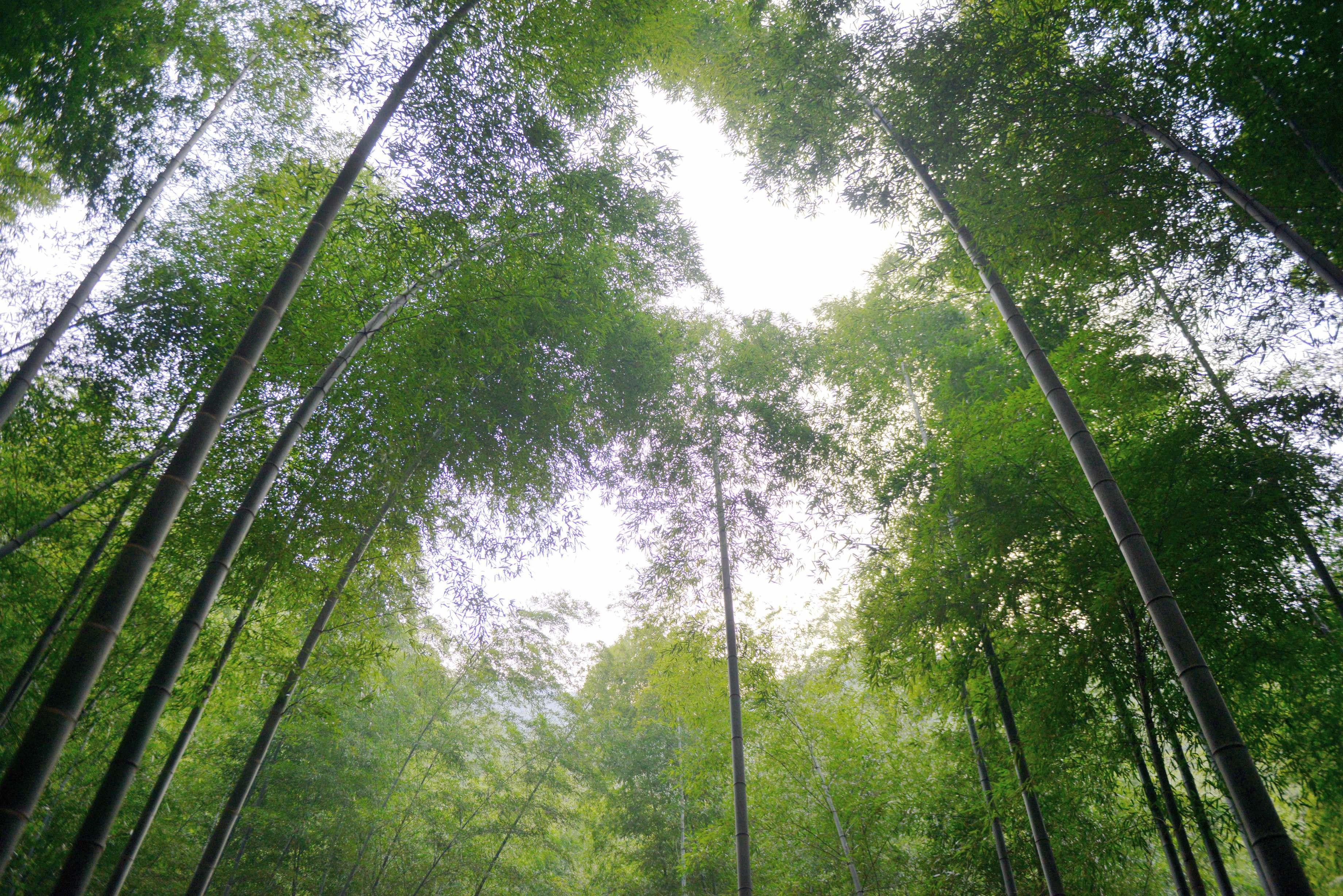 """在竹海风景区中,两山夹峙之间,山涧水和天然雨水汇集成了小小的""""镜湖"""