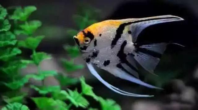 鱼缸清洗方法图解