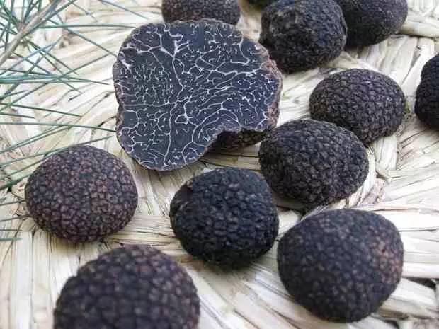 黑松露菌的做法_法式黑松露菌汤做法大全。
