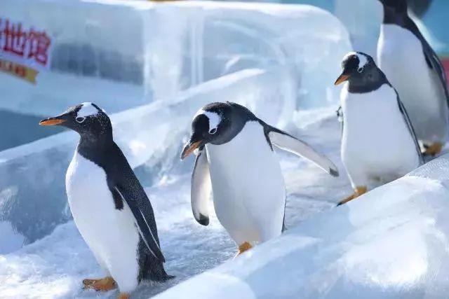 人物训练动物原理是什么_狈是什么动物图片