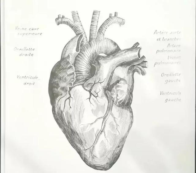 解剖图全手绘,这个老师太牛了