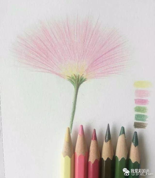 彩铅手绘--淡淡的合欢花