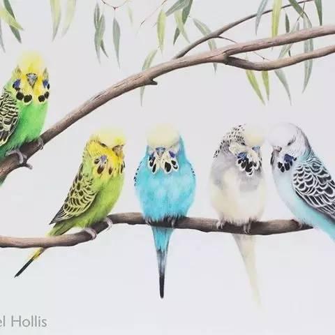 火烈鸟手绘装饰画羽毛