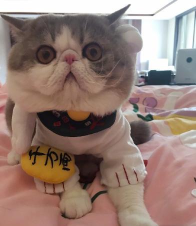 想不到,比霍思燕养的无毛猫更可怕的,是李冰冰的宠物!