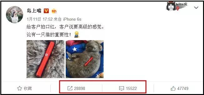 妞妞2015无需播放器下午撸_宠物 正文  @妞妞:撸猫撸出新商机.