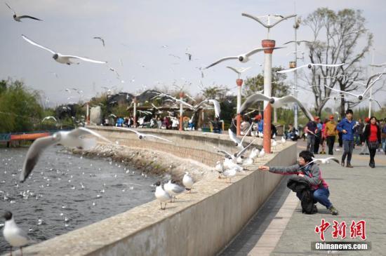 2017年,云南旅游市场健康快速发展,预计共接待海内外游客5.67亿人次