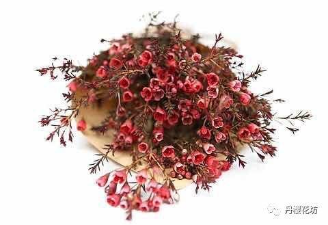 限时闪购|优质花材澳洲腊梅68元/扎,下单再送郁金香种