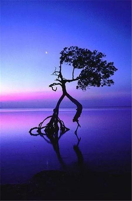 前进就有了方向,社会就有了规则,世界因此而美丽,人生因此而美好.