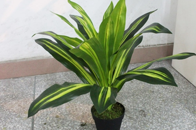 二,针叶植物散财图片