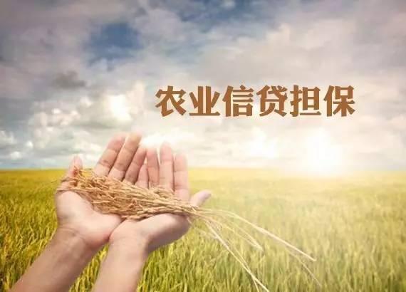 全国农业信贷担保体系初步形成