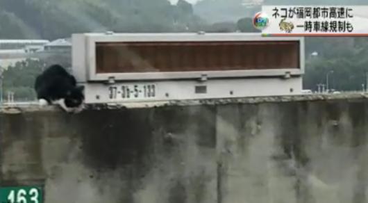 海外网1月18日电 当地时间18日上午,日本福冈都市高速公路惊现一只猫
