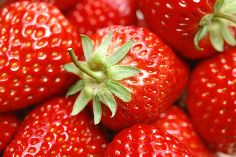 草莓的基本原理_草莓的基本原理 生态与栽培技术