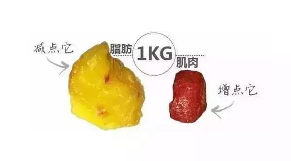 肌肉由什么组成_一样的体重,肥肉和肌肉身材有何不同?一张图直观的对比!
