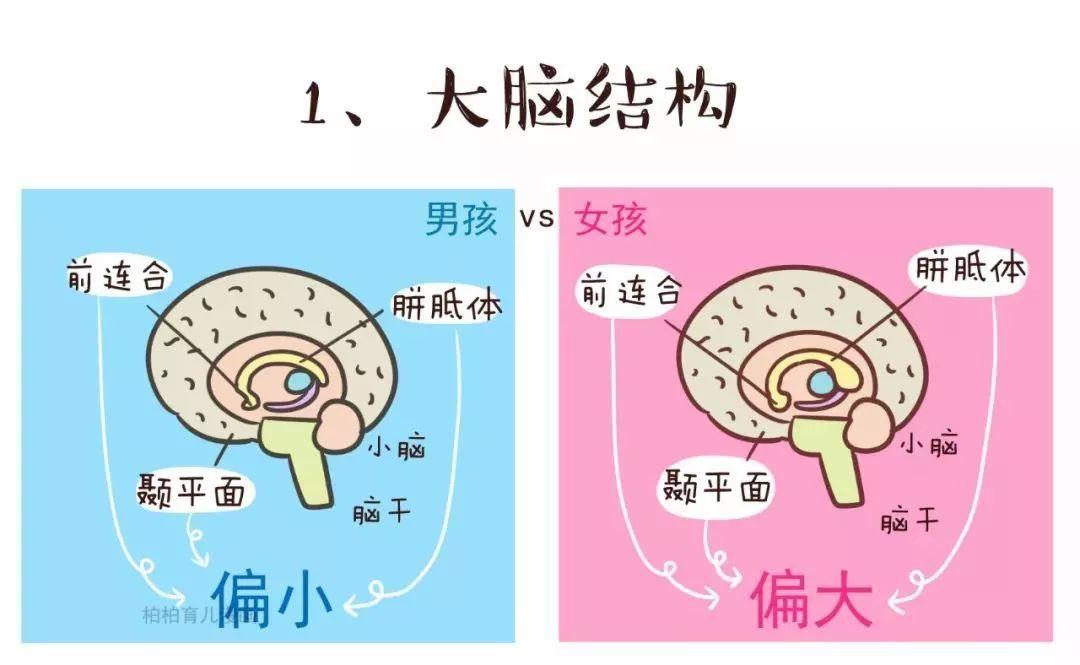 和 颞平面(言语感知机能)也明显大于男性; 事实上,男女两性大脑结构的图片