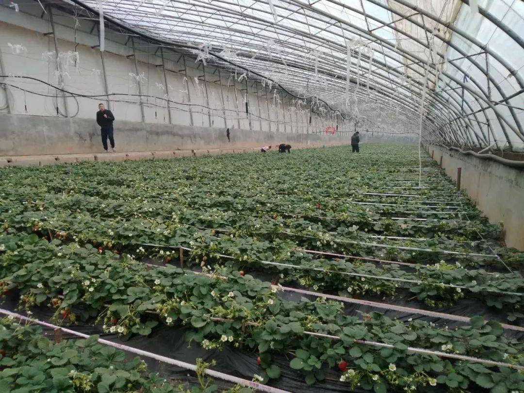 【陕西有机蔬菜公司_有机蔬菜厂家】-黄页88网