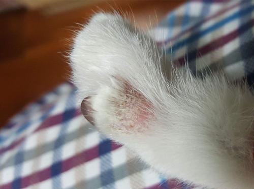 土猫猫癣起在脚上,土猫猫癣治一个月不好