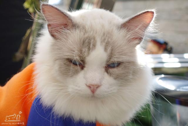 壁纸 动物 猫 猫咪 小猫 桌面 640_427