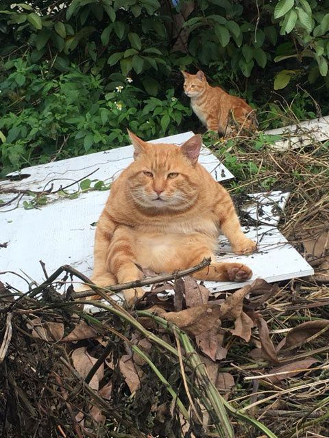 偷偷撸偷拍图区_5.这只橘猫在外面舔毛时,突然发现被一网友偷拍后.