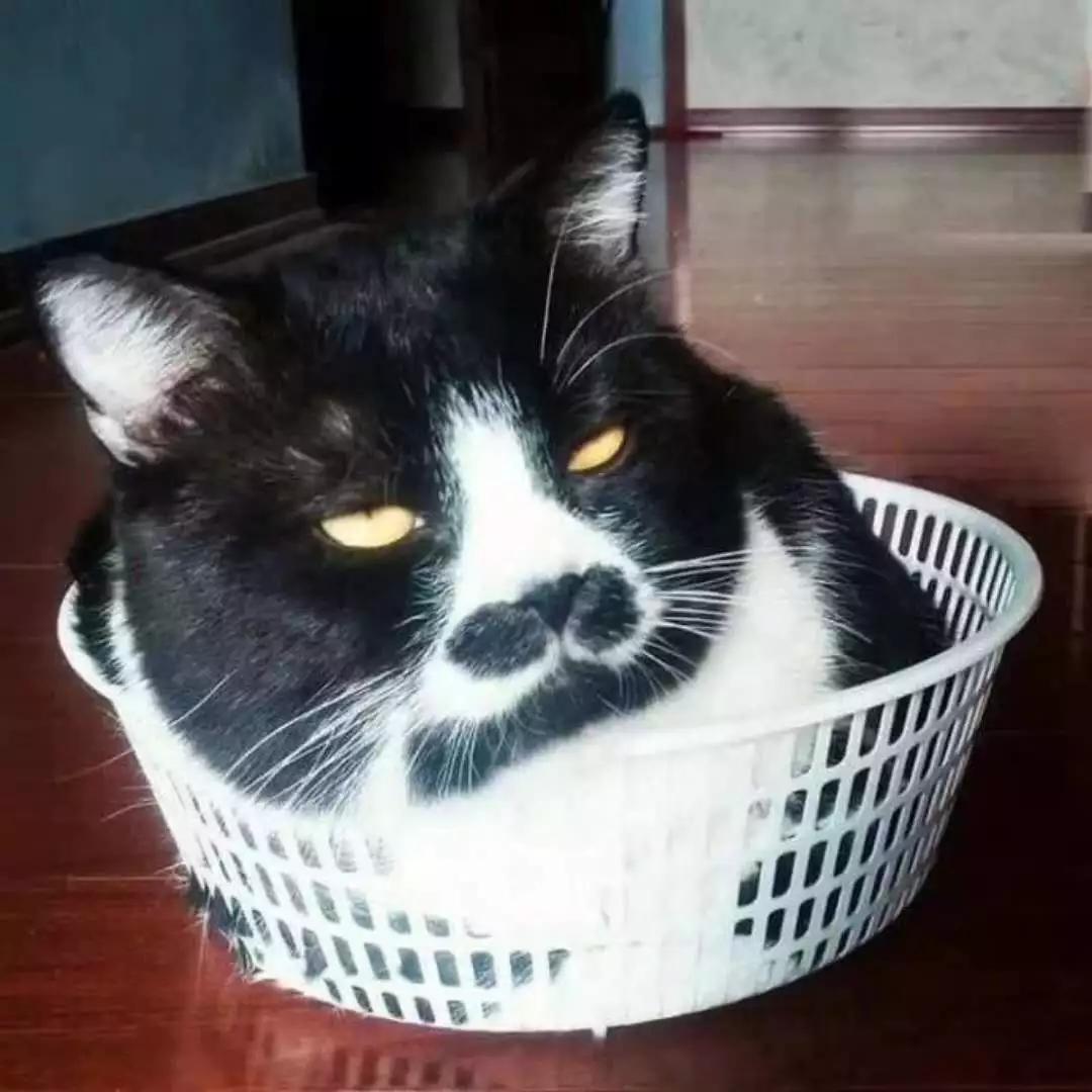 发现一种比吸猫和撸猫更有意思的玩法