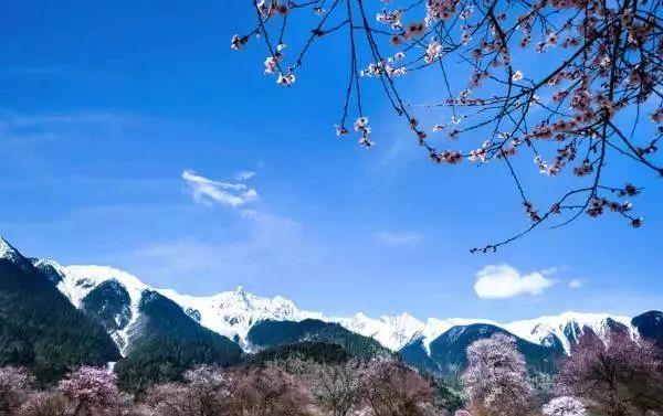 三月情迷林芝桃花,访最美的春天一卧9天游