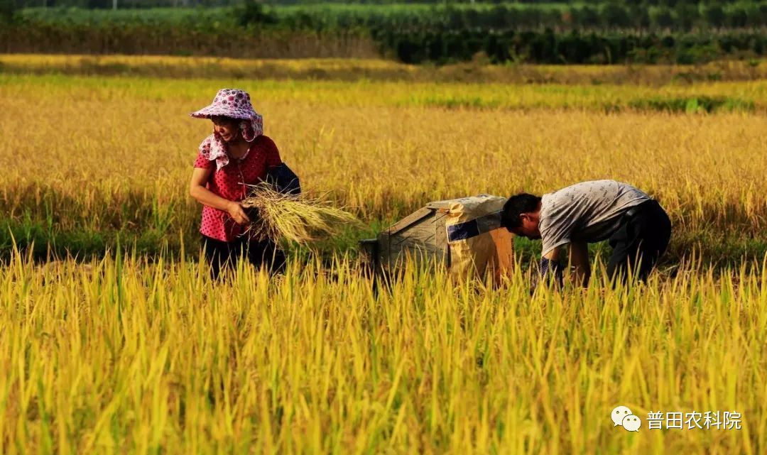 种地壁纸_你真的会种地吗?未来这六类农民会变成真正的困难户!