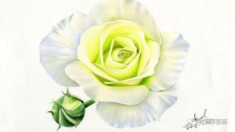 用彩铅笔画一朵【超美的玫瑰】