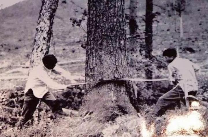 油锯,大兴安岭林业工人的