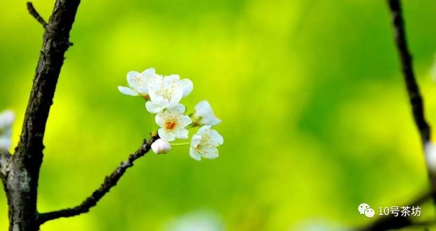 春天的脚步近了 文 林笔顺