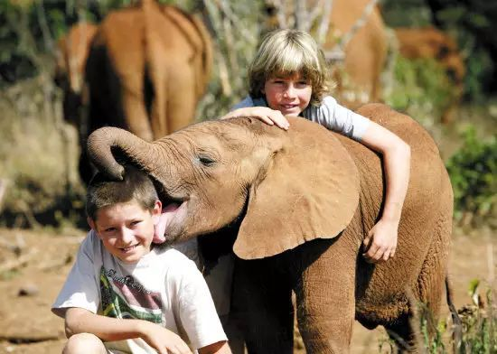 人与动物_你可以尝试亲手给小象喂个奶,感受一下人与动物亲密接触的乐趣.