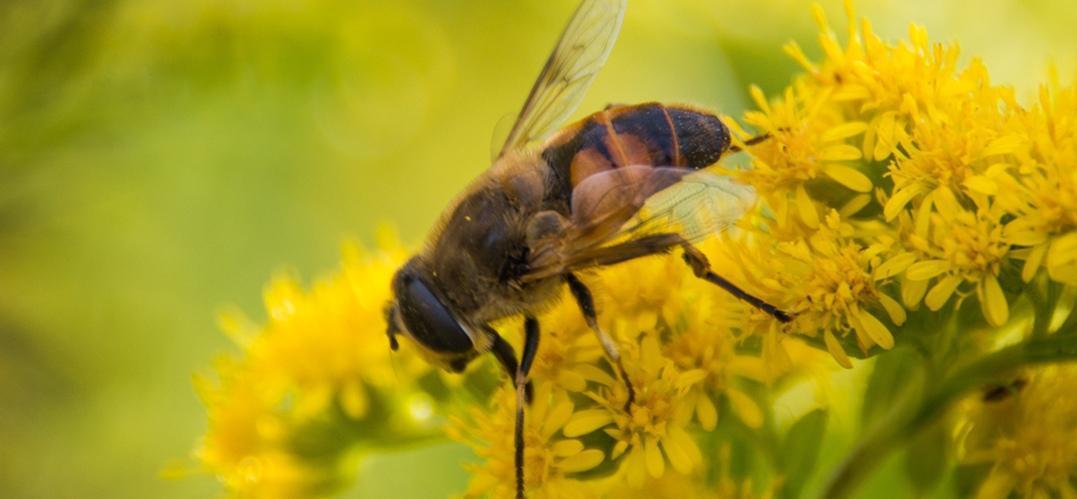 美食正文而宝宝蜂蜜农家,是蜜蜂采啥蜜,天然卖啥蜜,不能大家去适用一岁半鸽子能需要吃小农家图片