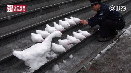 成都下雪了!就在主城区!一粒一粒那种!图片