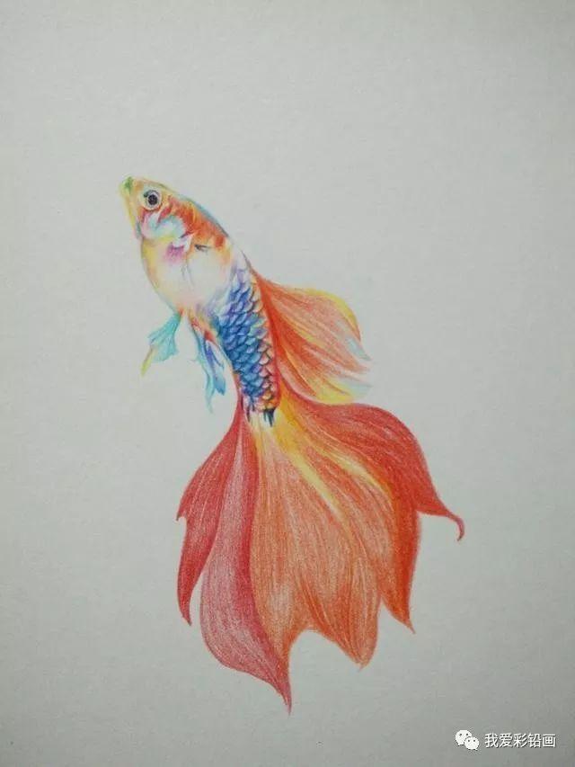 国画金鱼画法步骤图解