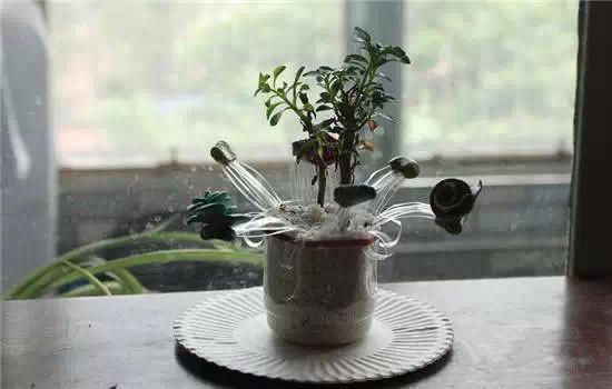 可乐瓶手工制作花盆幼儿园