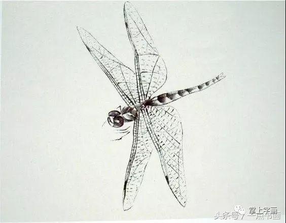2.用墨或曙红分染头、眼、胸、腹,添网纹孔时注意靠翅膀下侧边缘纹孔需画大些(前实后虚).