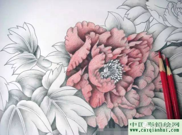用彩色铅笔画一幅国画工笔牡丹花的图文教程步骤08、一朵花的对比画