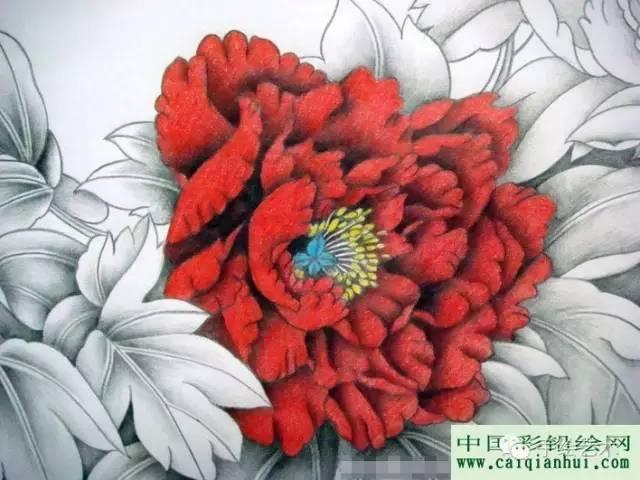 彩铅画国画牡丹教程:用彩色铅笔画一幅国画工笔牡丹花的图文
