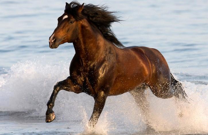 五年级作文假如我有一匹马