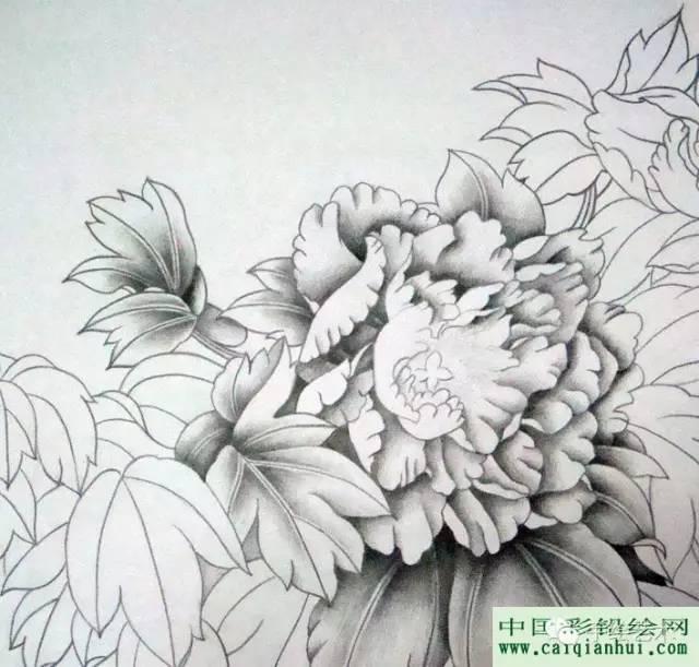 用彩色铅笔画一幅国画工笔牡丹花的图文教程步骤02,把花朵的层次一点