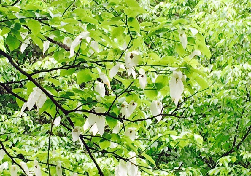 逮到!现在四川最黄的原来是它!今年川内赏花指南,新鲜出炉!