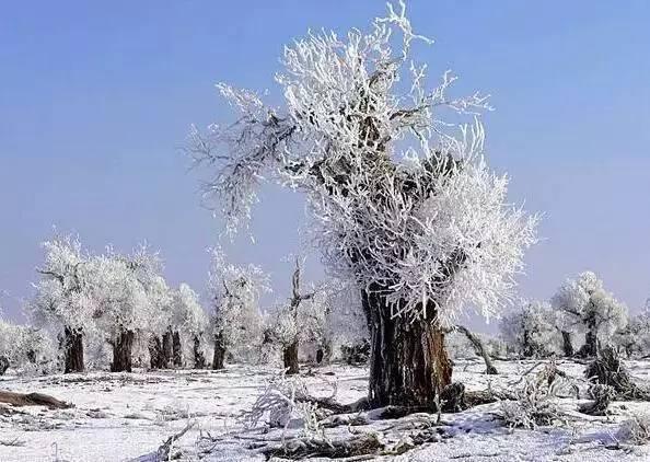 冬日里的胡杨林,美的触目惊心!