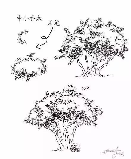 20种植物的手绘速写技法
