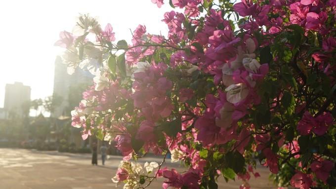 逃离零下三十摄氏度的极冷天气,去春暖花开的西双版纳避寒