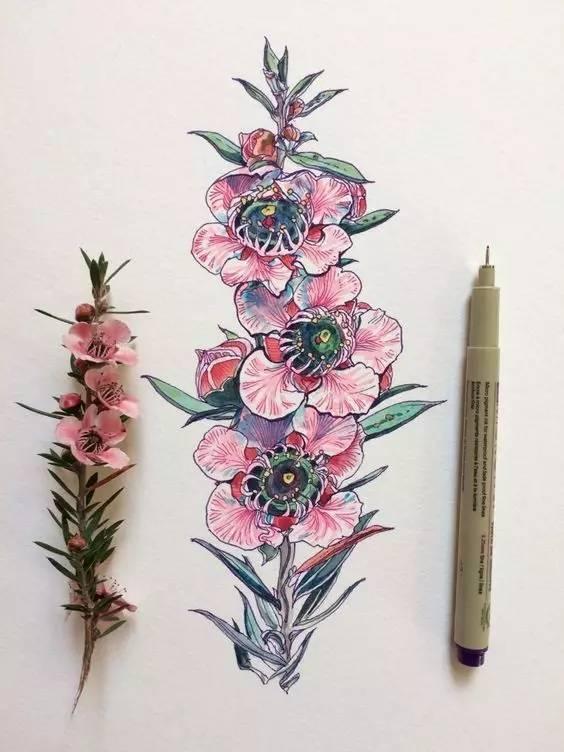 针管笔 水彩——植物手绘,值得学习