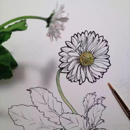 针管笔 水彩 植物手绘,值得学习图片