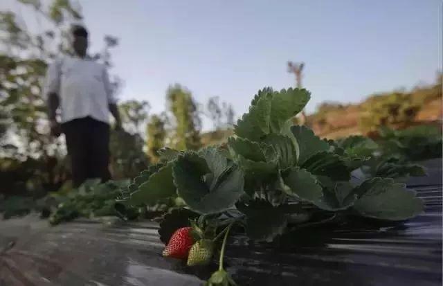 农场随便进、食物随便摘,共享农场或许不是梦|田园综合体-陕西康大体育设施
