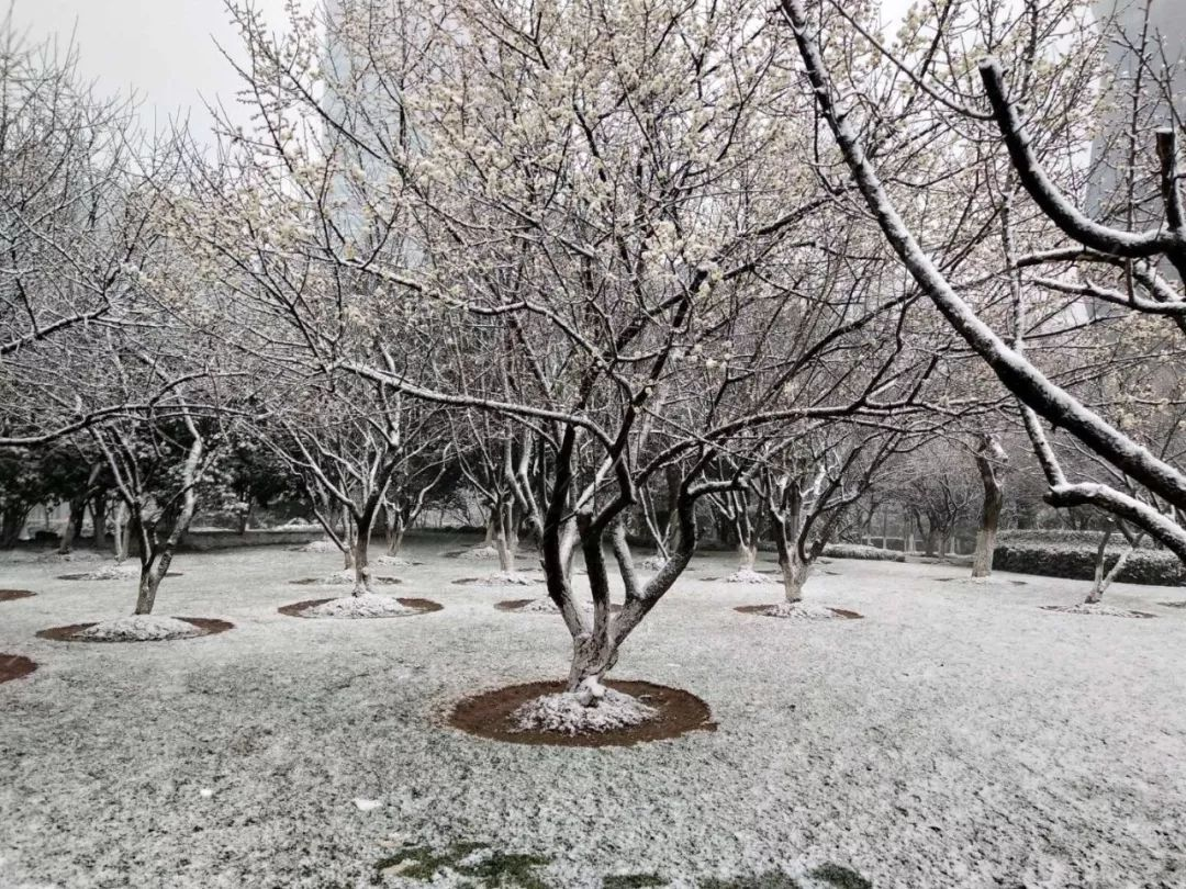 赞爆!宁波最美雪景大全!