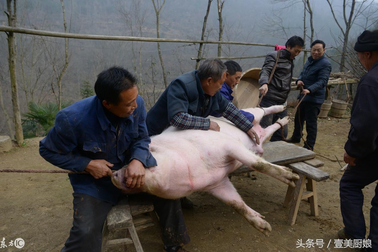 农村杀年猪场面震撼 城里人一辈子吃猪肉 没吃过杀猪饭
