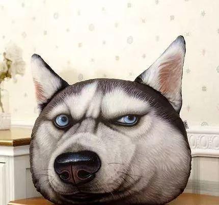 养宠物的坏处英语_办公室养宠物的十大好处