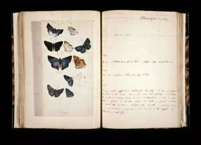 这世界有多美多神秘,探险家的笔记本就有多精彩